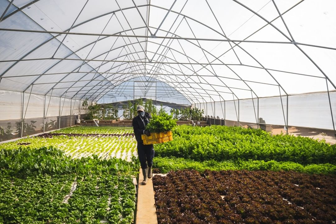 Aquaponics Tunnel with a farmer working on the farm.