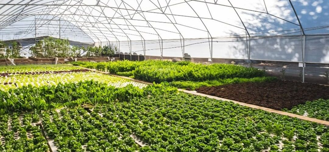 Aquaponic Tunnel Filled with green plants.